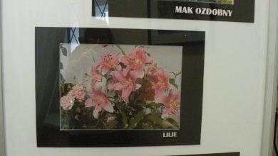 """Photo of """"Piękno kwiatów"""" Leszka Szwaji"""